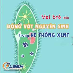 VAI TRÒ CỦA ĐỘNG VẬT NGUYÊN SINH TRONG HỆ THỐNG XLNT