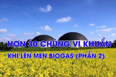 Có Hơn 30 Chủng Vi Khuẩn Lên Men Biogas (Phần 2/2)