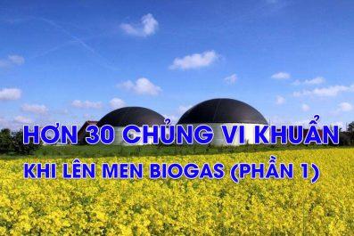 Có Hơn 30 Chủng Vi Khuẩn Lên Men Biogas (Phần 1/2)