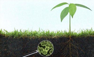 Đất Đai Có Thể Làm Sạch Ô Nhiễm Như Thế Nào?