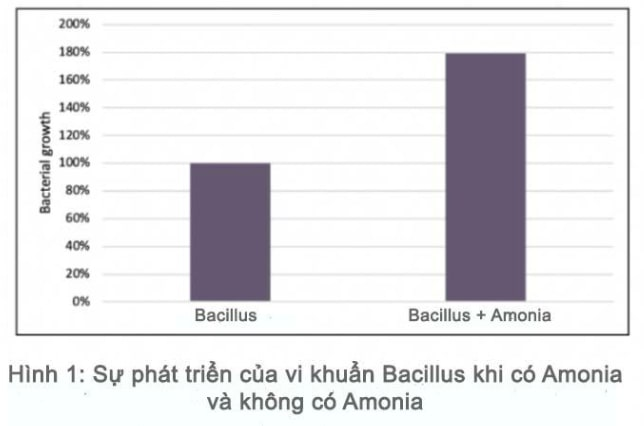 khử amoniac bằng vi sinh; khử amoniac