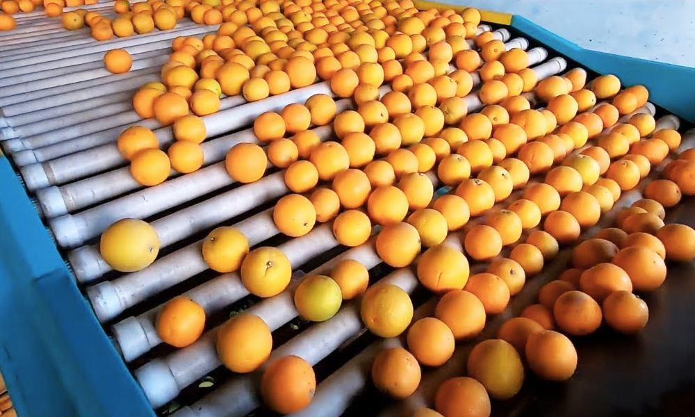 nước thải chế biến trái cây