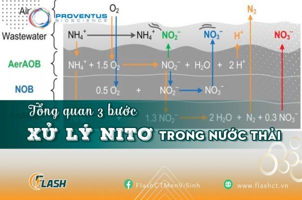 Tổng quan 3 bước xử lý nitơ trong nước thải