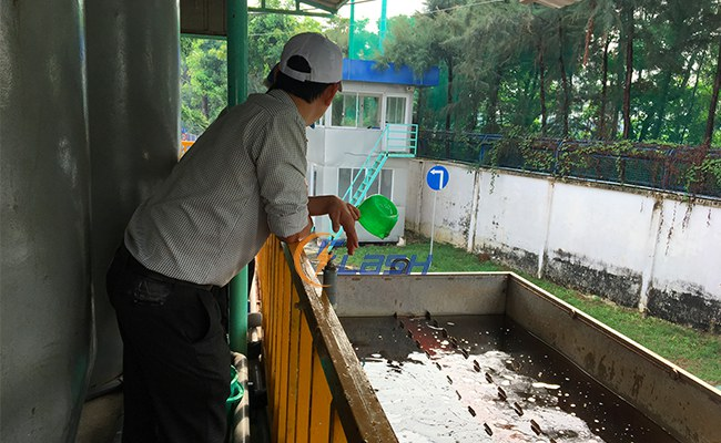 trãi nghiệm nuôi cấy vi sinh nước thải xi mạ; nước thải xi mạ
