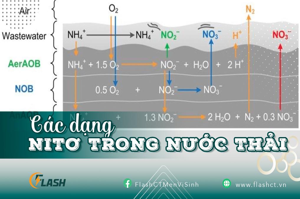 các dạng nitơ trong nước thải flash ct