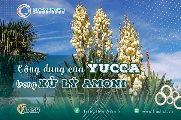yucca là gì? Công dụng xử lý amoni của Yucca