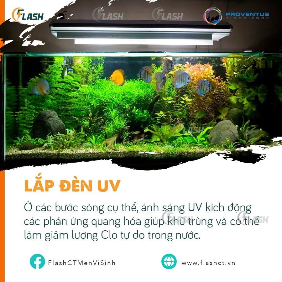 khử clo nước máy nuôi cá bằng tia UV