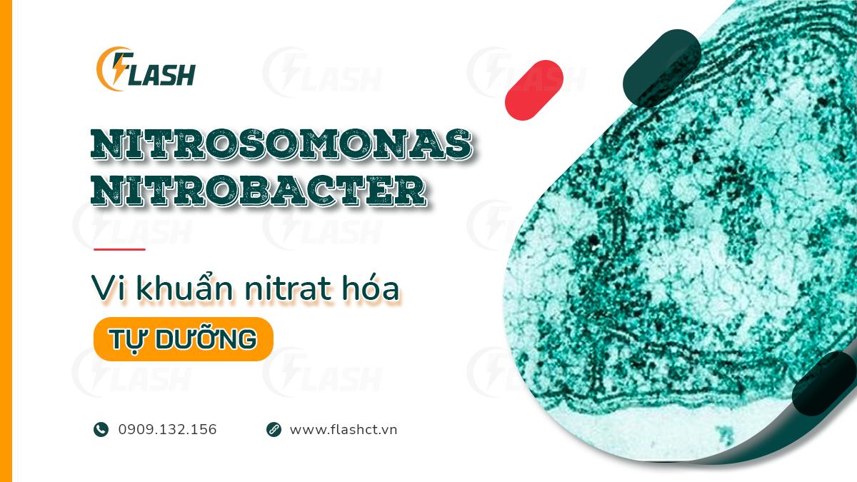 vi khuẩn nitrat hóa tự dưỡng nitrosomonas nitrobacter