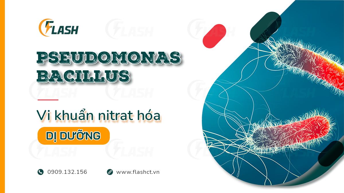 vi khuẩn nitrat hóa dị dưỡng pseudomonas bacillus nitrosomonas nitrobacter
