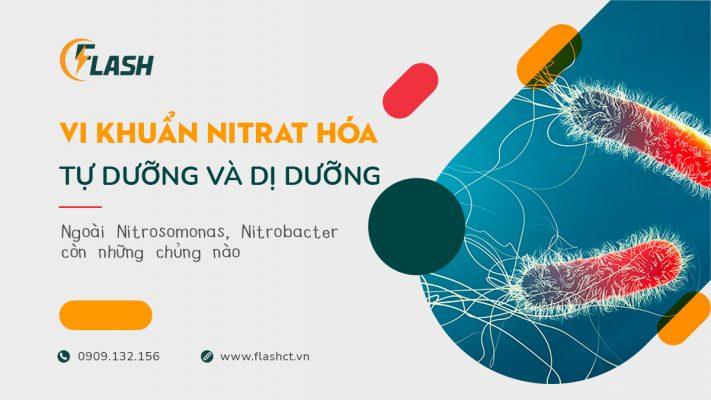 vi khuẩn nitrat hóa tự dưỡng và dị dưỡng, ngoài nitrosomonas nitrobacter còn những chủng nào