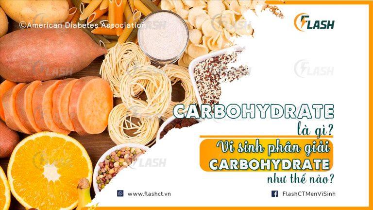 carbohydrate là gì? Vi sinh phân giải carbohydrate như thế nào?