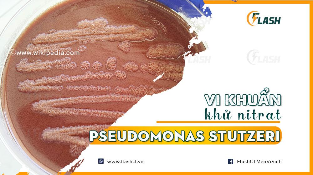vi khuẩn khử nitrat Pseudomonas Stutzeri